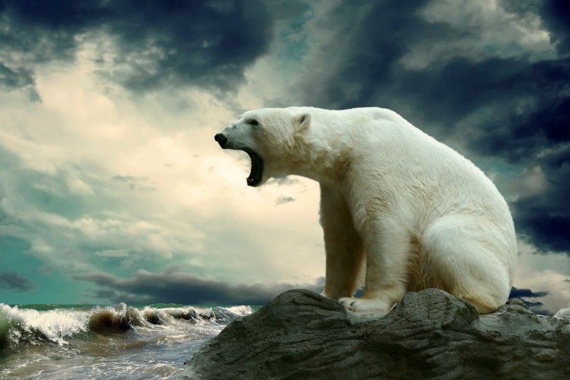 High Resolution Polar Bear Wallpaper HD Picture Widescreen