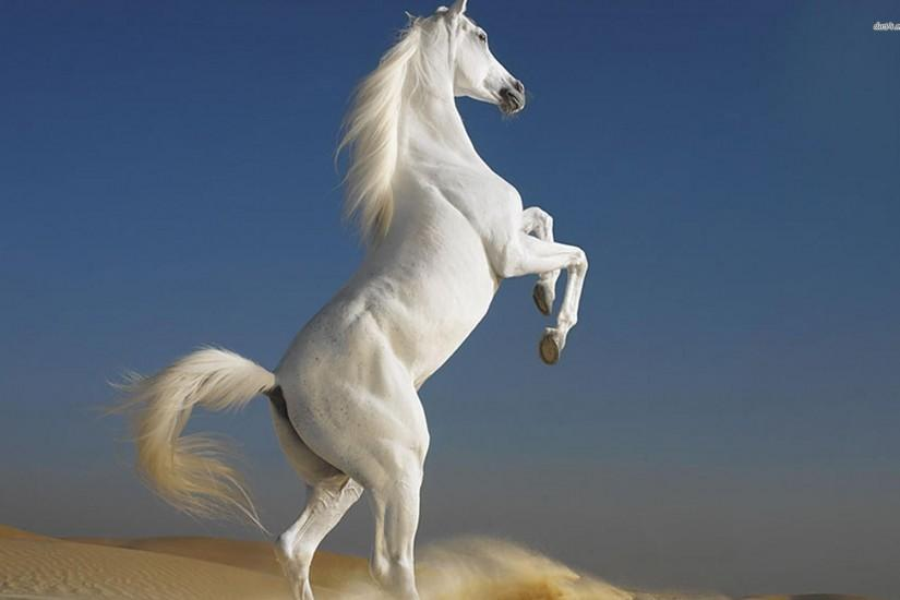 beautiful horse wallpaper 1920x1200 full hd