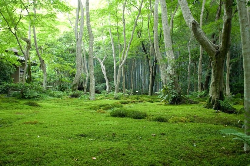 Green Forest wallpapers and stock photos