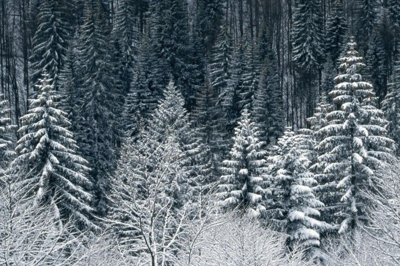 2560x1440 Snow Trees Forest. How to set wallpaper on your desktop? Click  the download link from above and set the wallpaper on the desktop from your  OS.