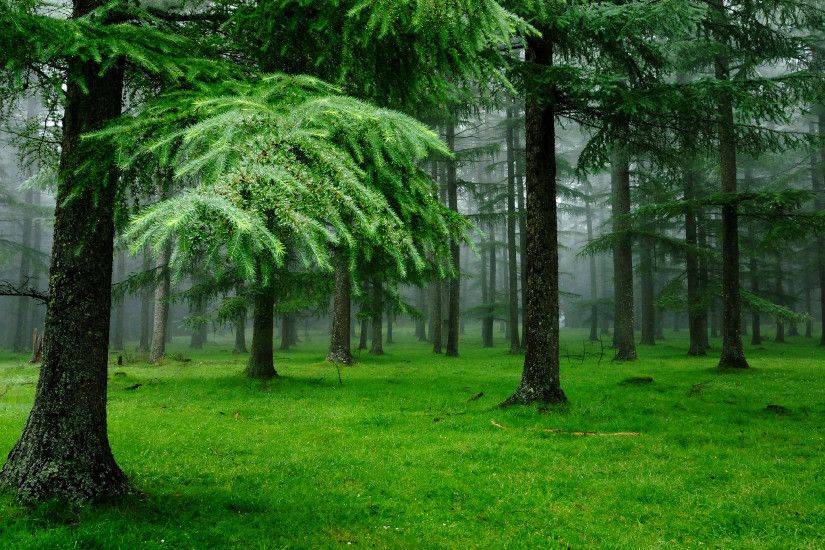 Green Forest Photos
