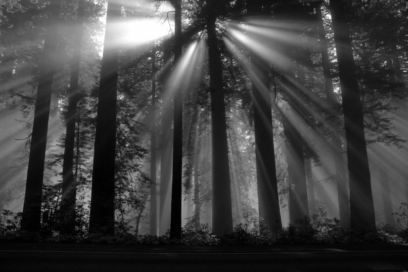 photography, Nature, Black forest, Sun rays, Dark, Plants, Trees Wallpapers  HD / Desktop and Mobile Backgrounds