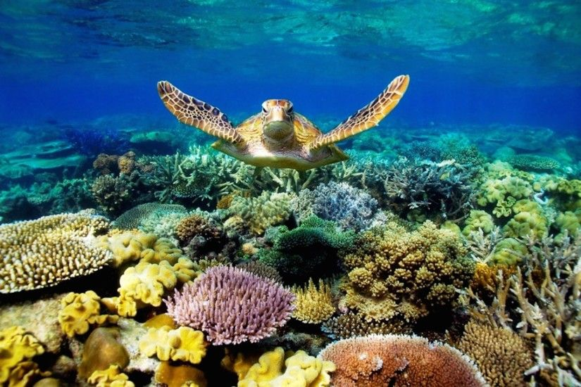 Great Barrier Reef Wallpapers 2100x1403 px– Full HD Pics