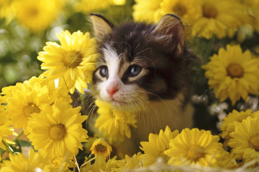 Kitten Among Mums