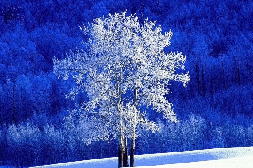 1920x1080 Winter snow tree and blue backgrounds wide  wallpapers:1280x800,1440x900,1680x1050 -