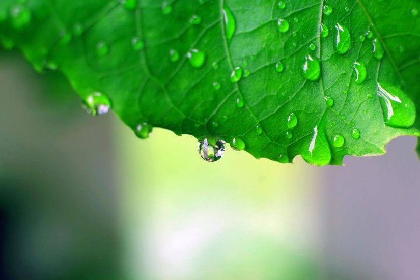 Rain Wallpaper Green Leaf Nature Rain Wallpapers Pictures ...