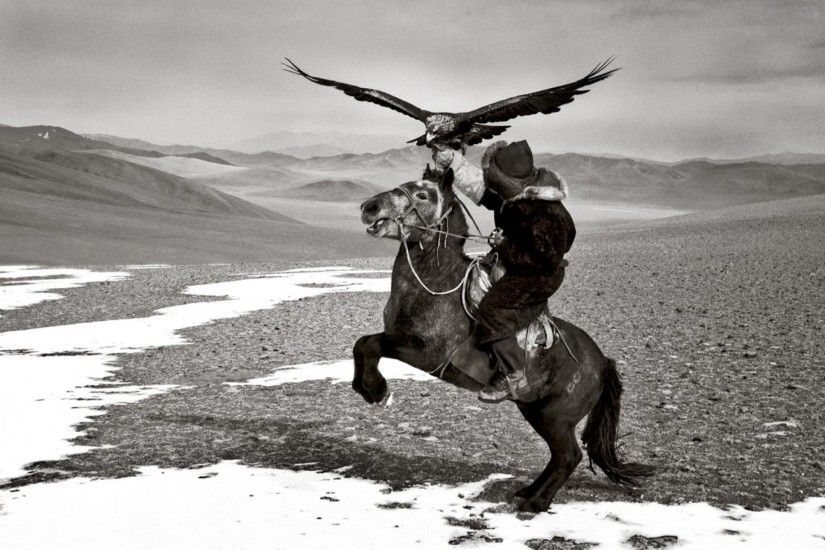 mountains horses grayscale mongolia hawks hamid sardar Wallpaper HD
