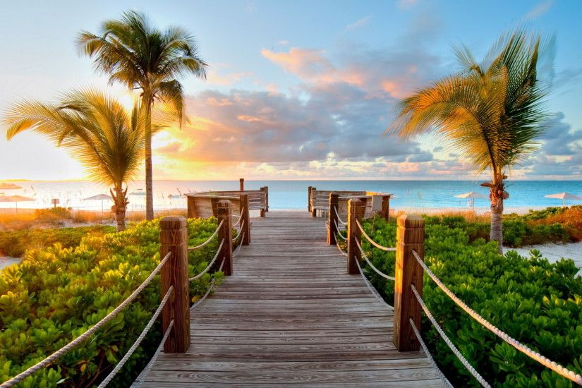 Tropical Boardwalk Background