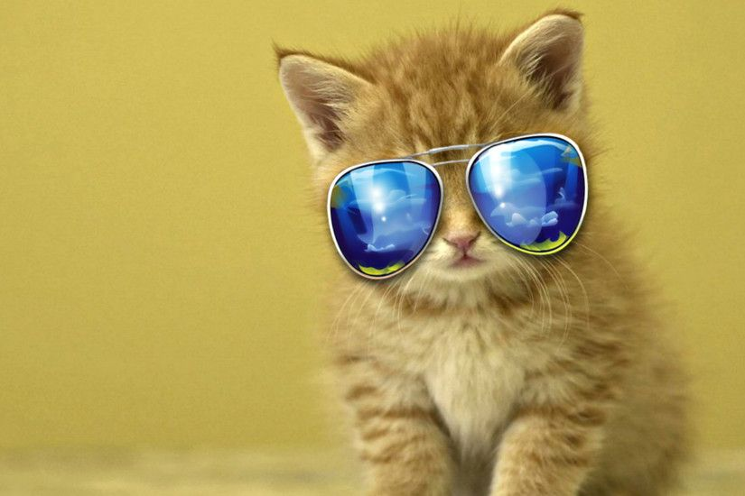 Kitten with sunglasses wallpaper