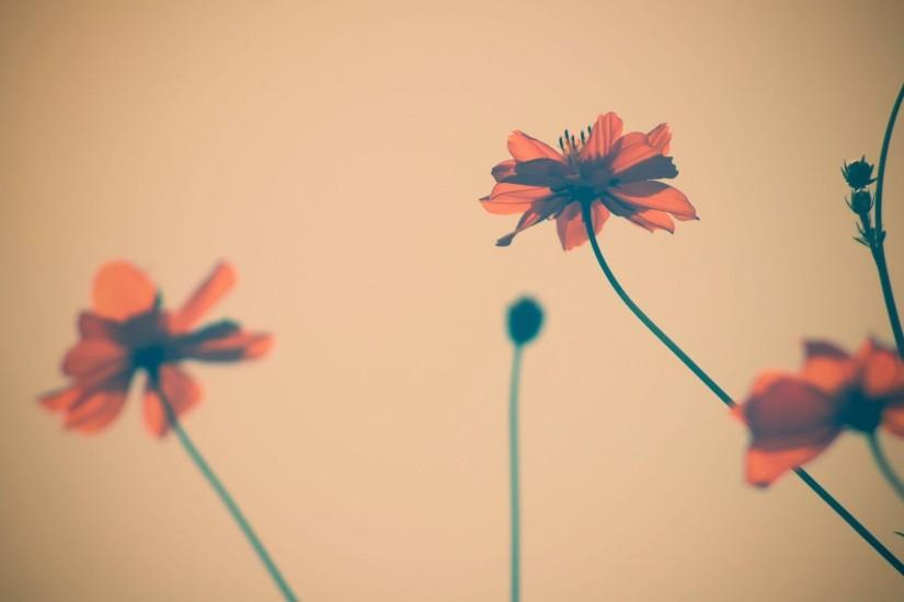 Vintage Flowers HD Pictures.