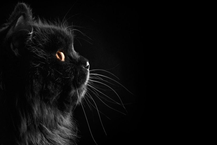 Black Cat Wallpaper 24160