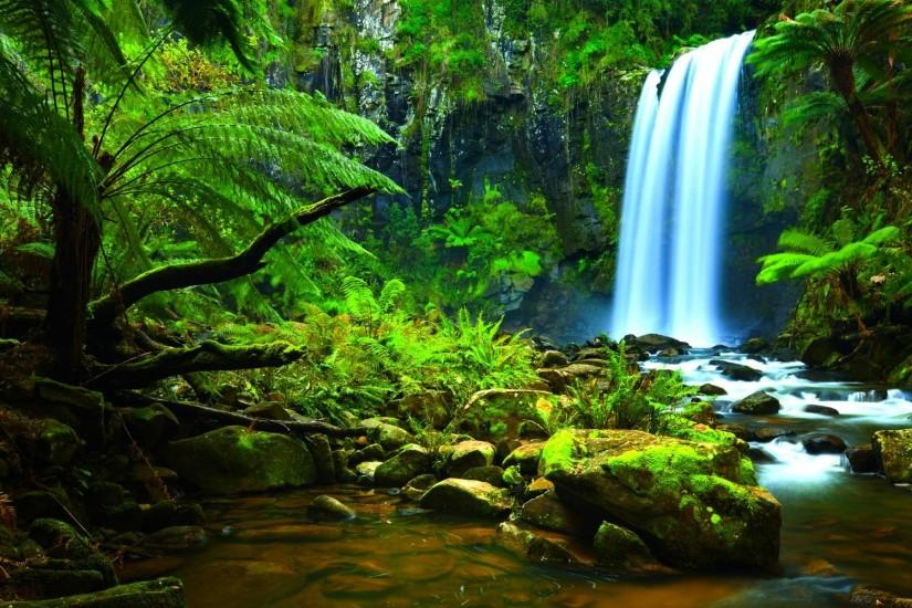 Amazon Rainforest HD Background Desktop #1523 Wallpaper | iWallDesk.