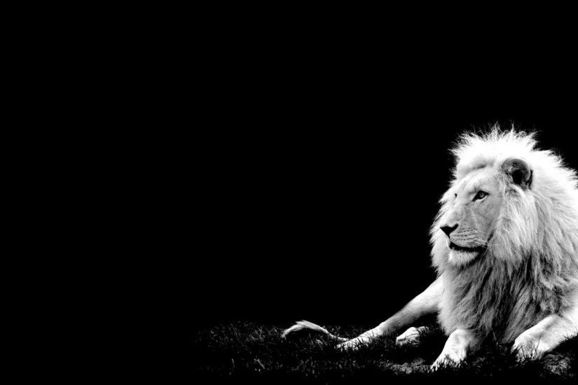 Lion Black And White Wallpapers For Android