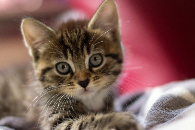 Pictures Of Cute Kittens Wallpapers (68 Wallpapers)
