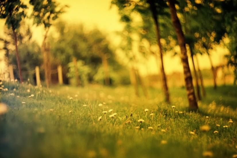 <b>Summer Field wallpapers</b> | <b>Summer Field