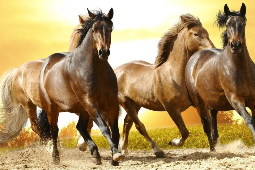 Beautiful wild horses wallpapers – Free full hd wallpapers for .