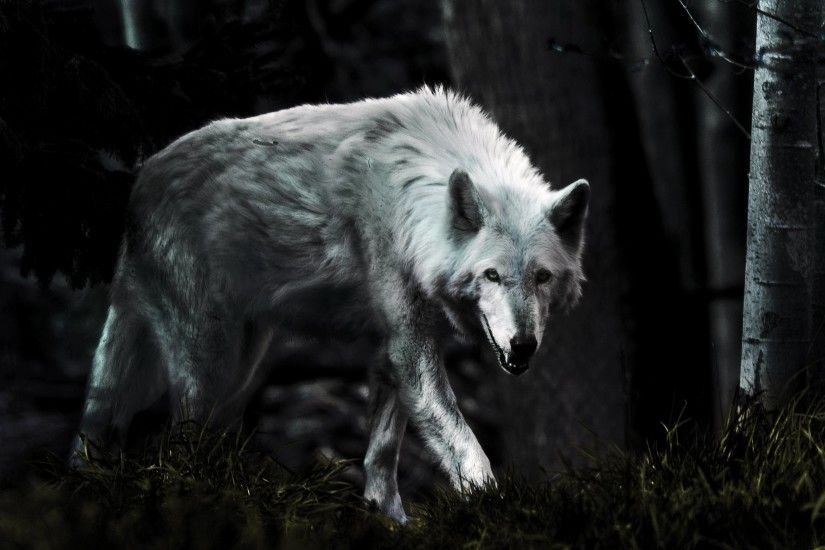 Dark Wolf HD Photo Wallpaper - HD Wallpapers|WallForU.com