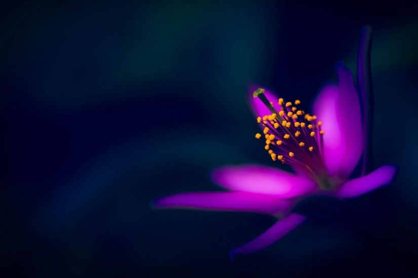 Awesome Purple Flower Have Purple Flower Images