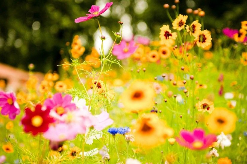 spring wallpaper backgrounds hd