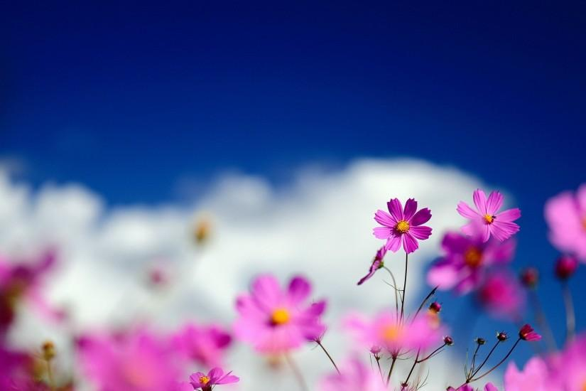 Background Themes 183 ① Download Free Amazing Wallpapers For