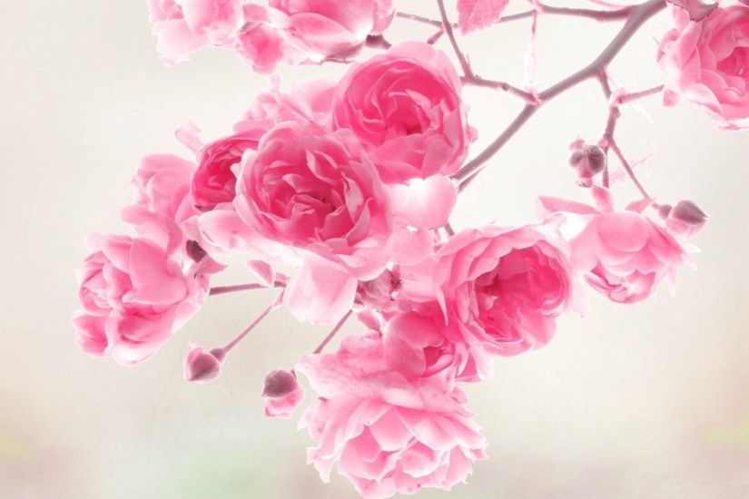 1920x1080 6. flowers-background-wallpaper5-600x338