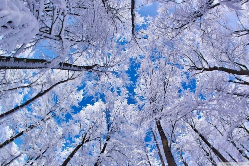 25 <b>Stunning Winter Wallpapers</b>