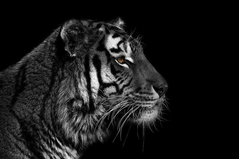 Tiger tumblr background - photo#34