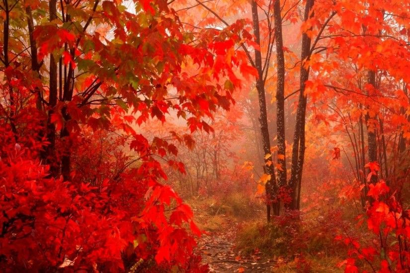 Leaves - Leaf Forest Autumn Season Fall Landscape Seasons Tree Color Leaves  Nature Wallpapers With Animals