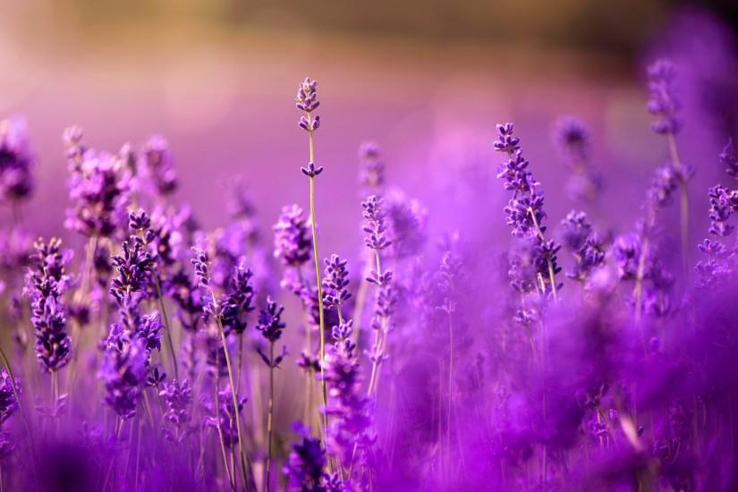 lavender background 2048x1337 for iphone 6