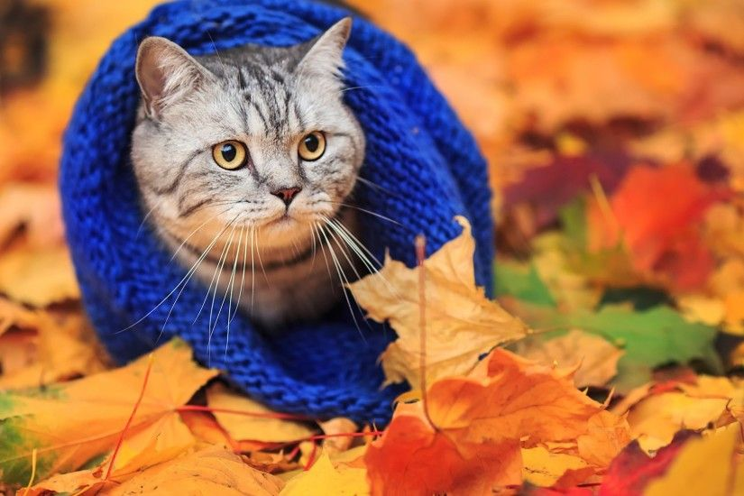 Cat in a warm scarf for fall foliage