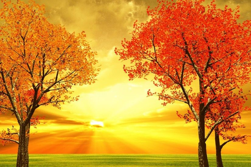 1920x1080 Beautiful Tag - Autumn Falling Nice Colorful Pretty Branches  Shine October Mirrored Lovely Foliage Golden Tree