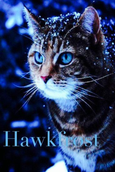 Hawkfrost was Tigerstar's son, half brother to Brambleclaw and Tawnypelt.  He and his sister. A WellWarrior CatsReal ...