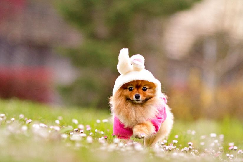 Cute Lovely Dog wallpapers (12 Wallpapers)