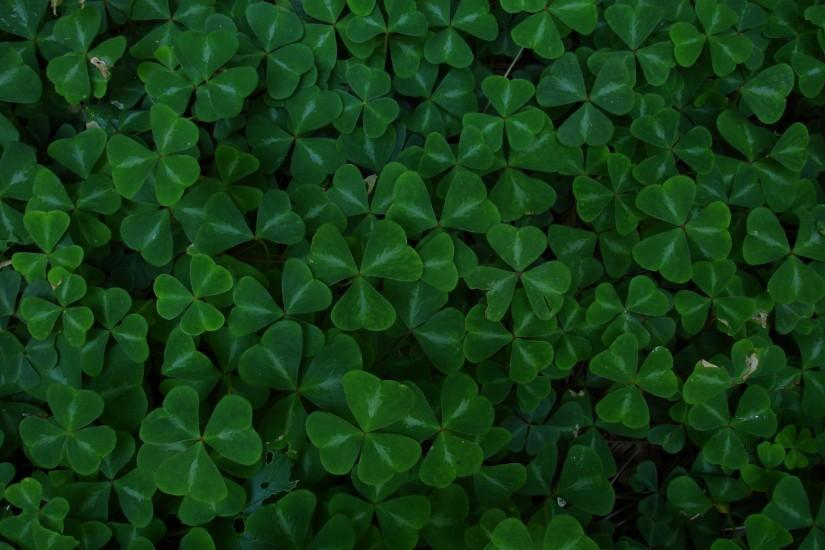 Displaying 16> Images For - Four Leaf Clover Background.