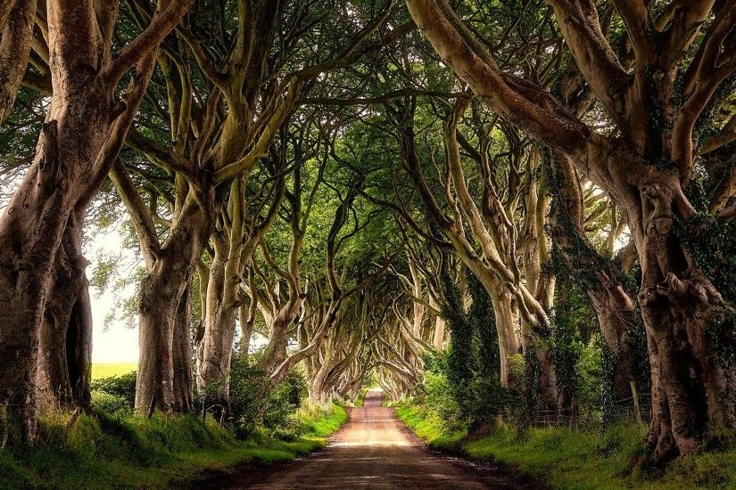 1920x1200 The Dark Hedges, Northern Ireland Wallpaper