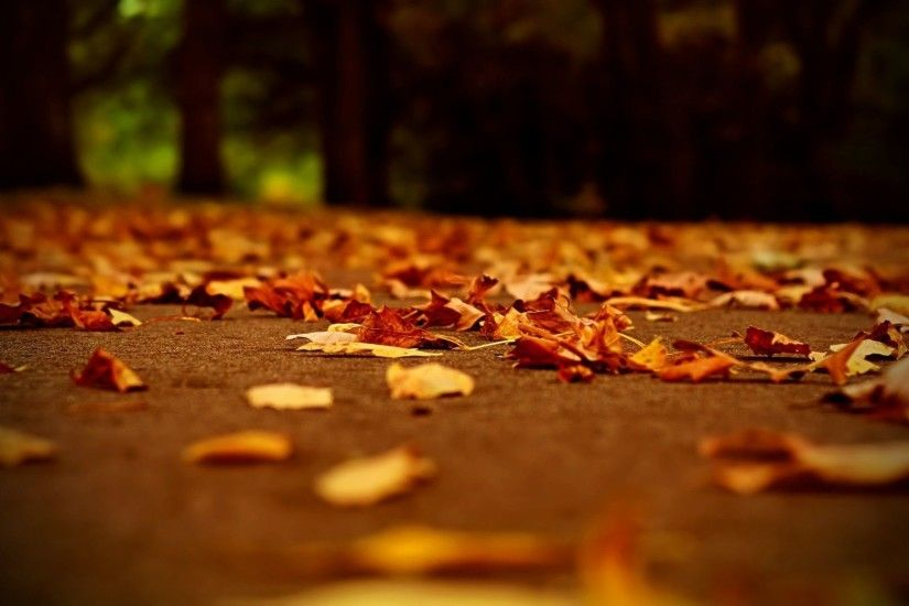The ground covered with fallen Autumn leaves