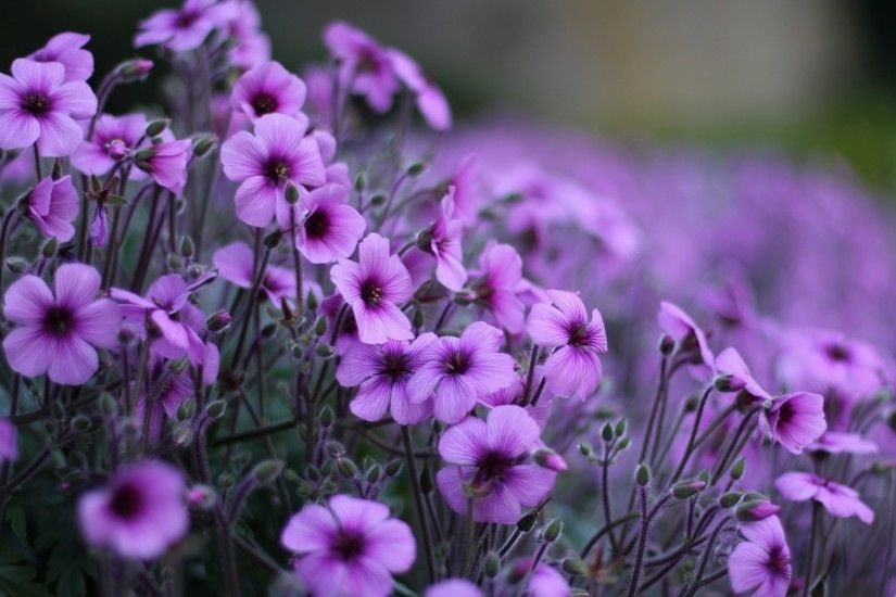 Beautiful purple flowers petals images free