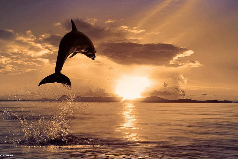 Dolphin Sunset Wallpapers Full Hd