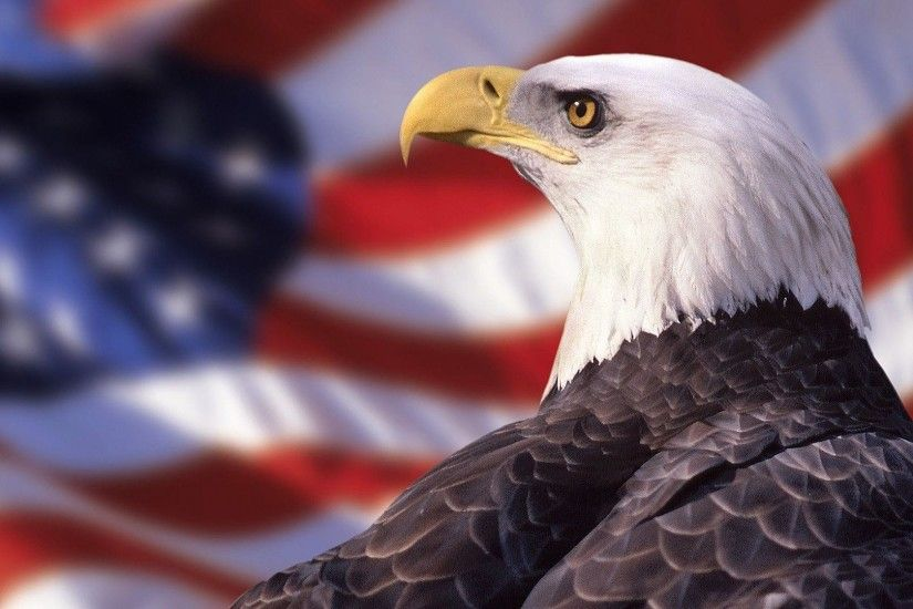 Bald Eagle American Flag Wallpaper | Best Free Wallpaper