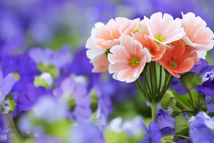 Amazing Flower Backgrounds