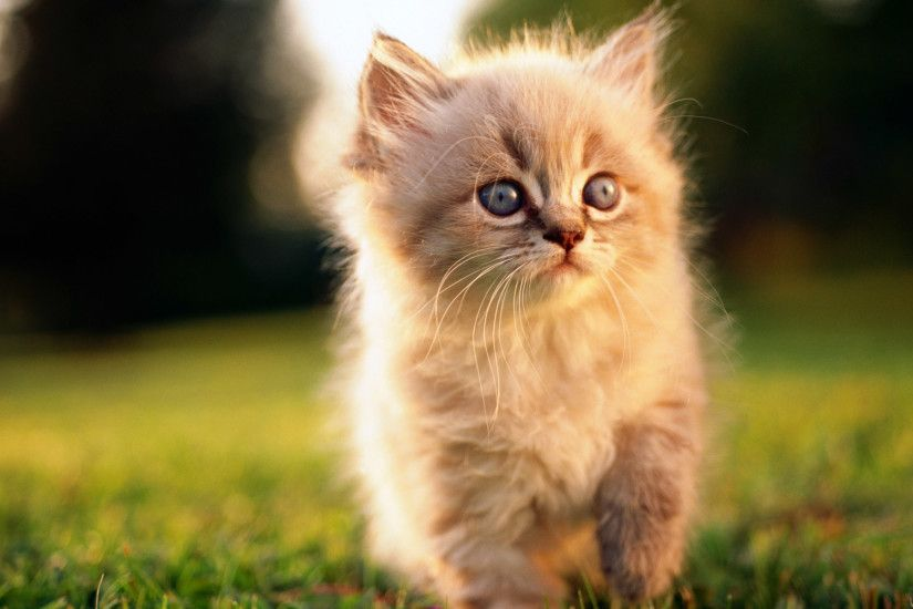 cute cat wallpapers for desktop. Â«Â«