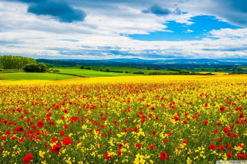 Red Wild Flowers 2016 4K Spring Wallpapers