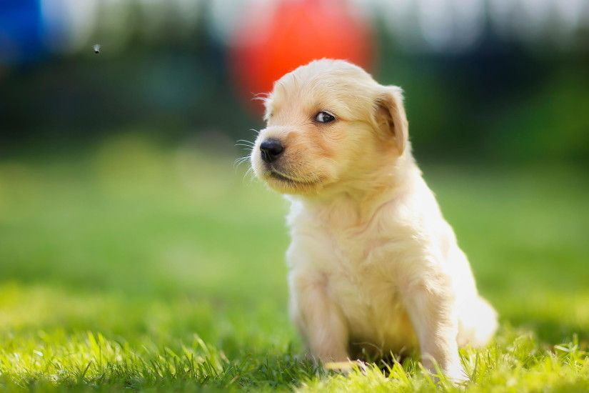 Cute Dog Wallpapers For Desktop
