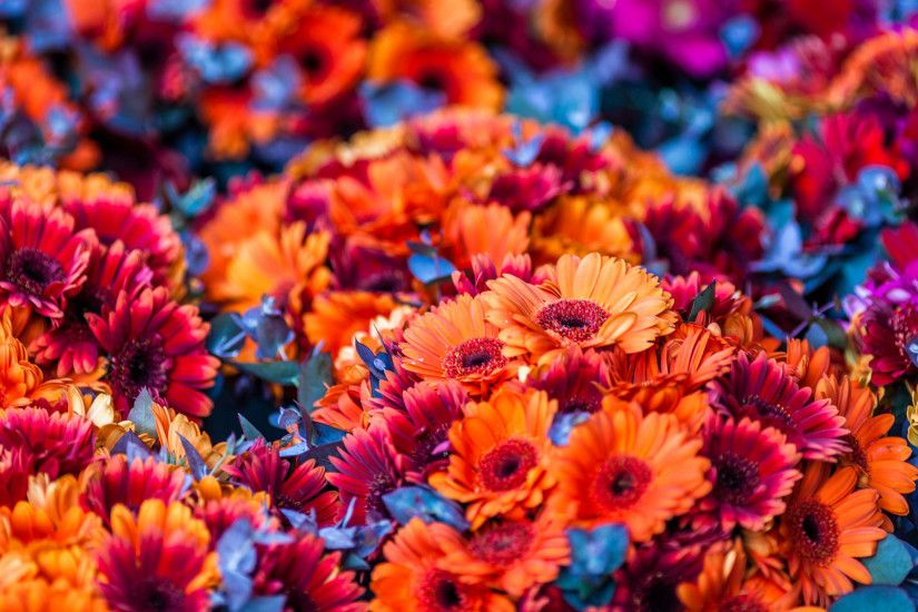 Colorful Flowers Blurred Background HD Wallpaper