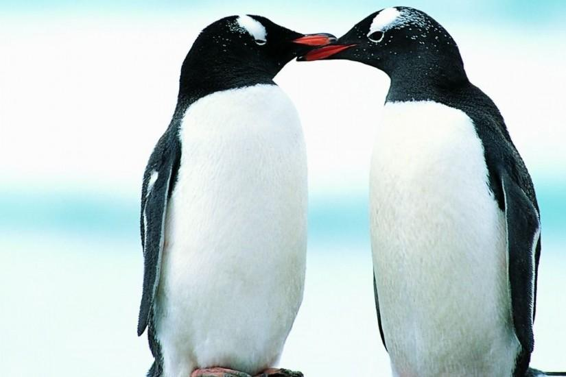 Download Free HD <b>Penguin Wallpaper</b> for Windows | oviyahdwallpaper
