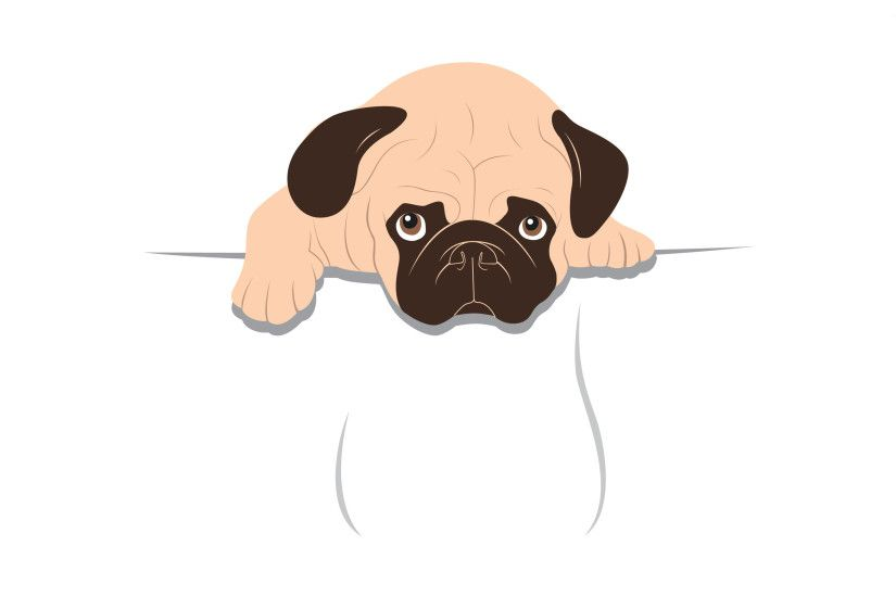 Sad pug wallpaper