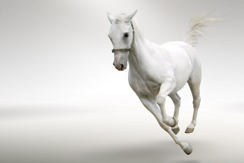 Horse High Definition