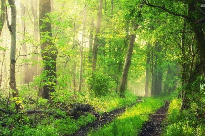 Grass Green Forest Plants Path wallpapers and stock photos
