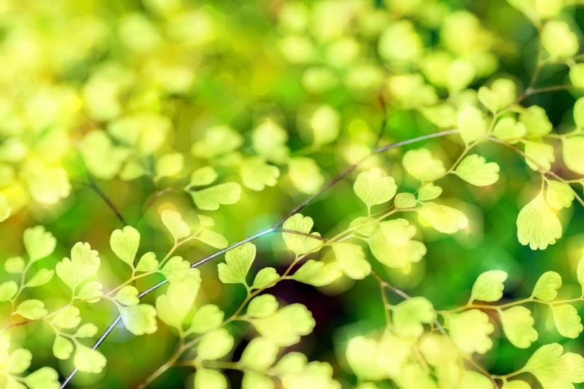 free download spring background 1920x1353