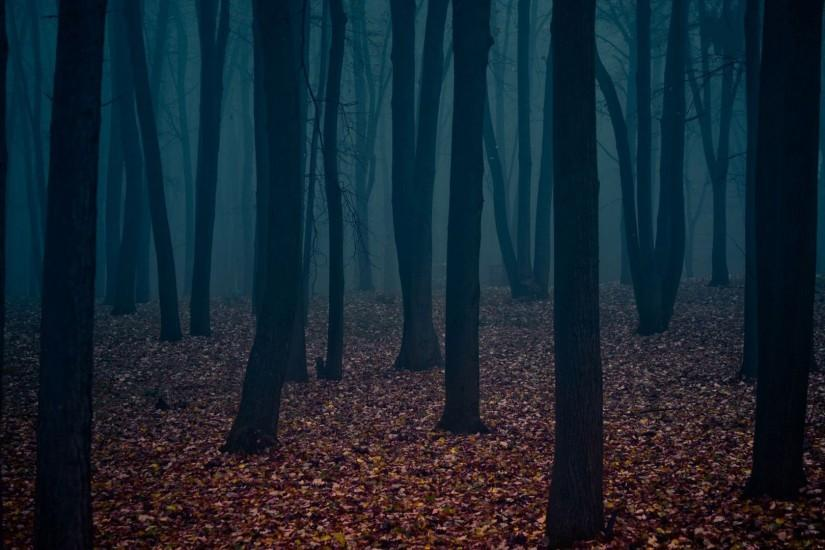 dark forest background 1920x1080 hd 1080p